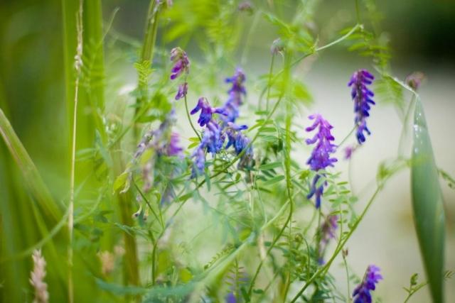 wilde bloemen  in Tuinen Kasteel Duivenvoorde Voorschoten